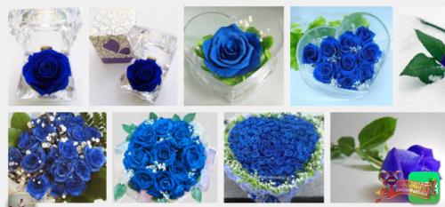Hoa hồng xanh vĩnh cửu - hoa hồng tặng cô giáo ngày 20/11